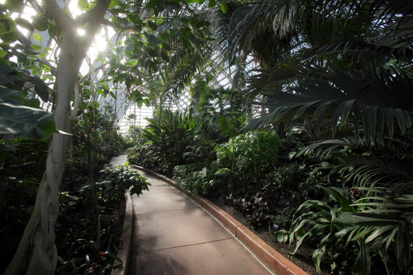 The Garfield Park Conservatory takes visitors to another world. During my visit it was well below freezinging outdoor and tropical indoors. by John Gress