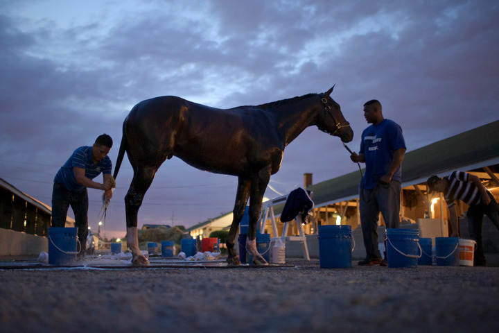 Kentucky Derby hopeful Verrazano is washed down after early morning workouts at Churchill Downs in Louisville, Kentucky, May 3, 2013. REUTERS/John Gress